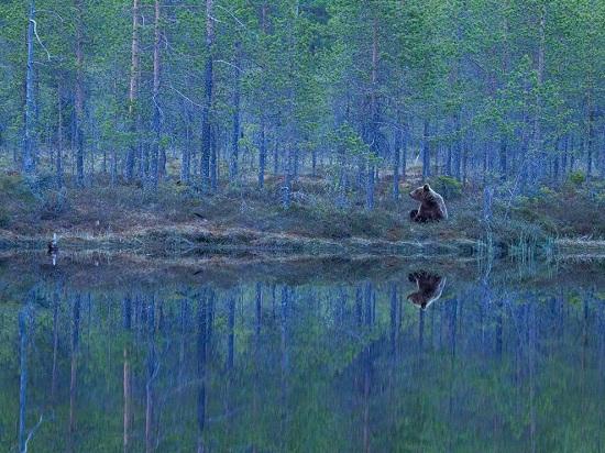 Bear-finland