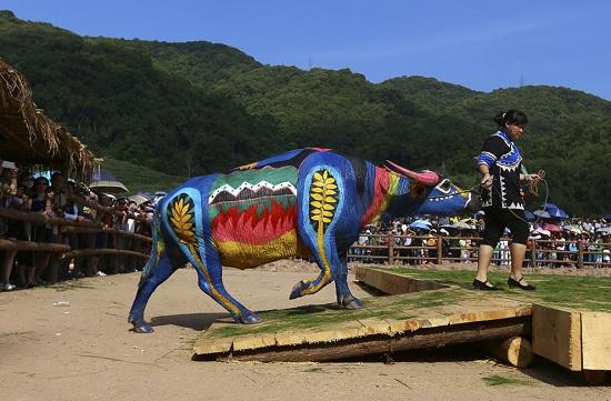 China-bull-s_w03