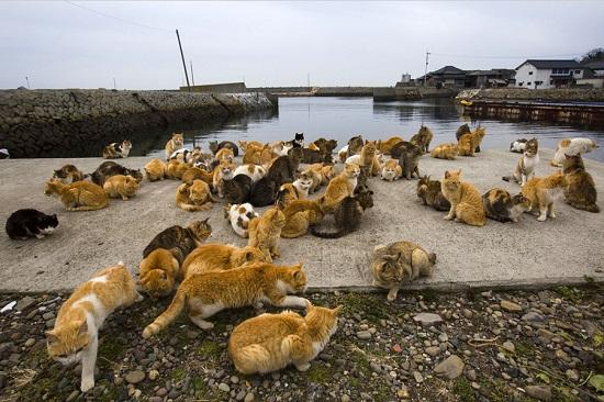 Cats-aoshima