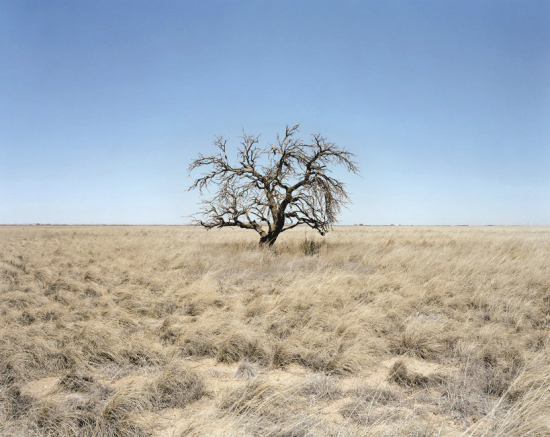Peter-brown-apricot-tree