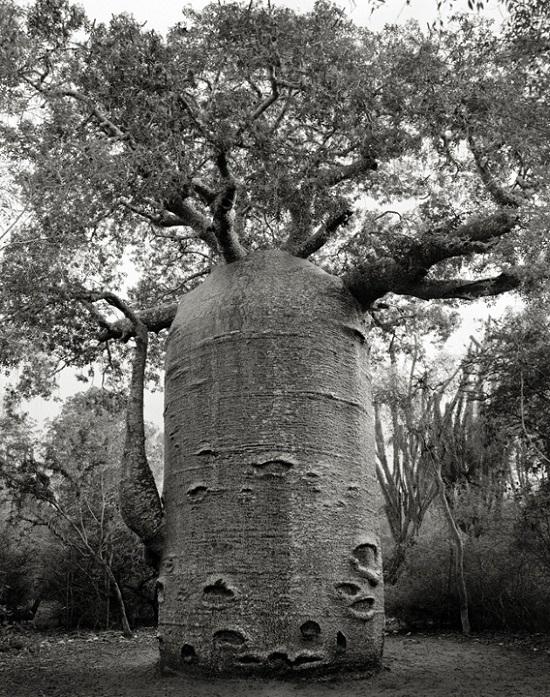 Teapot-tree