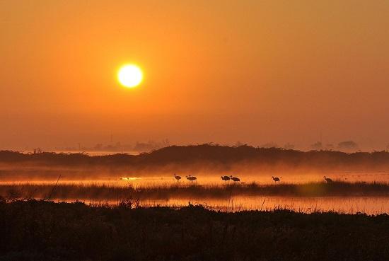 Crane-sunrise