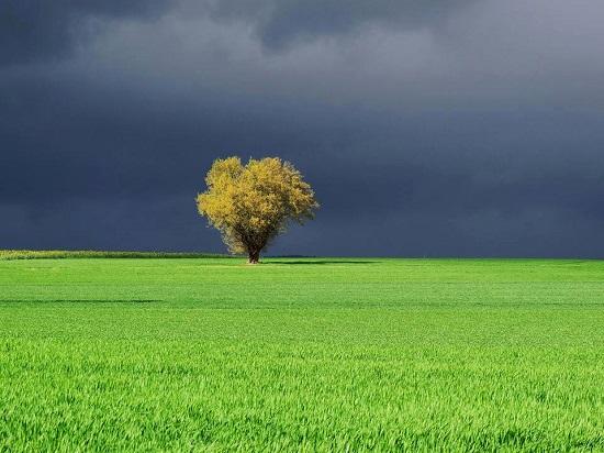 Tree-favero