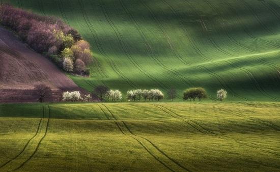 Moravia-spring