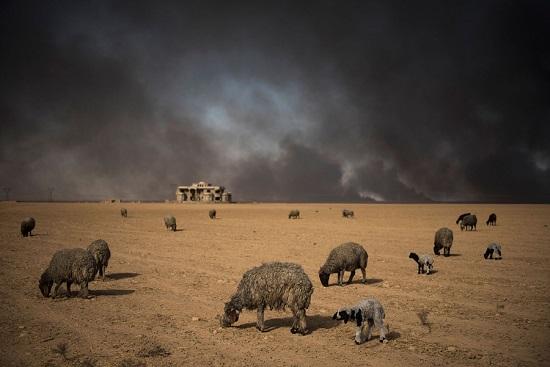 Mosul15