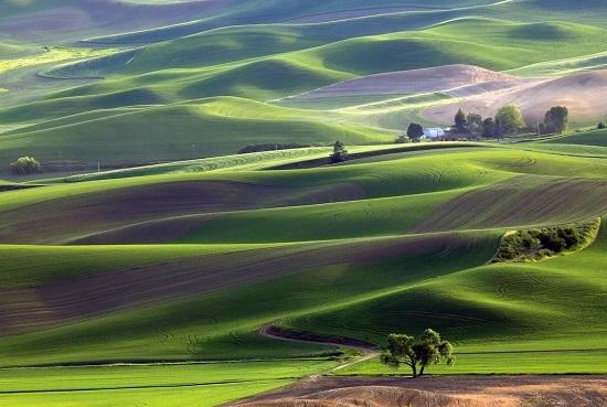 Washington-farm