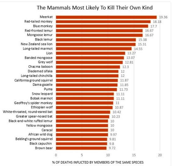 Mammals-kill
