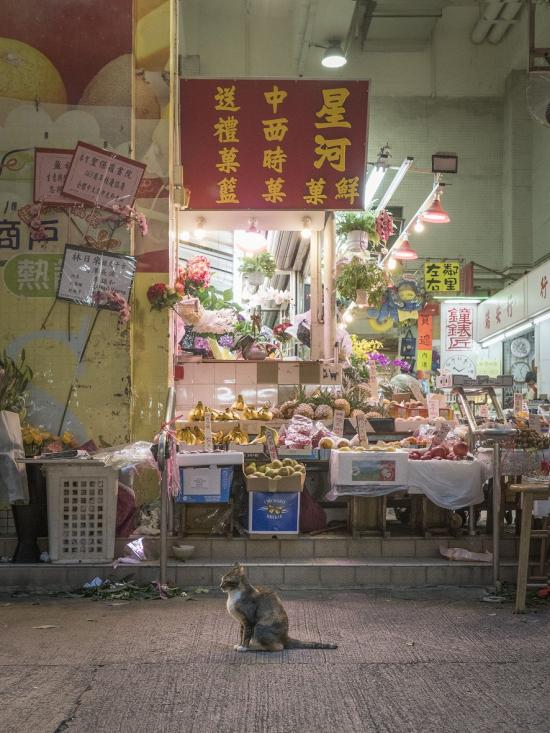 Hong-kong-cats17
