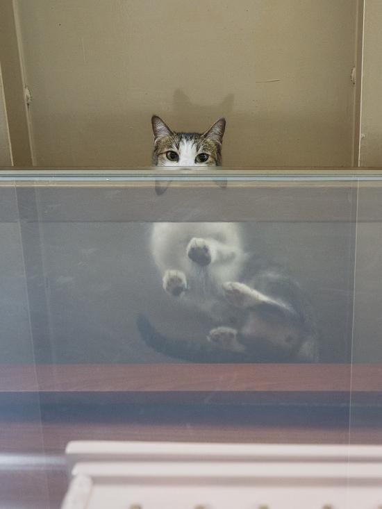 HK-shop-cats21