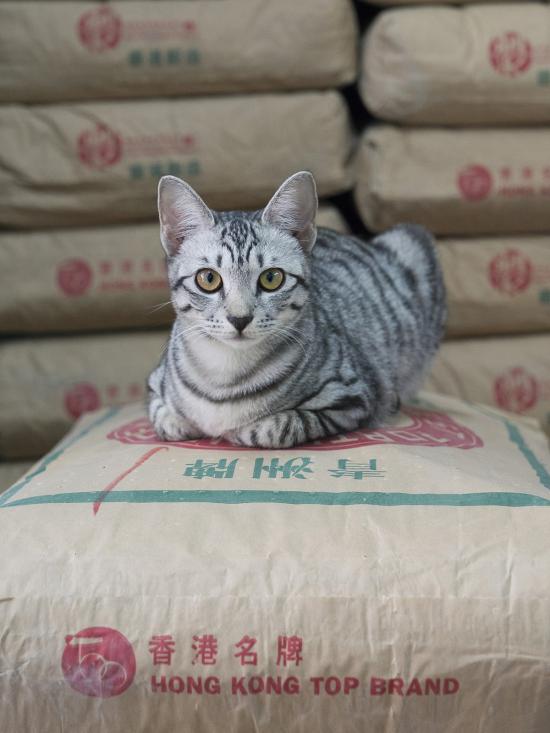 HK-shop-cats22