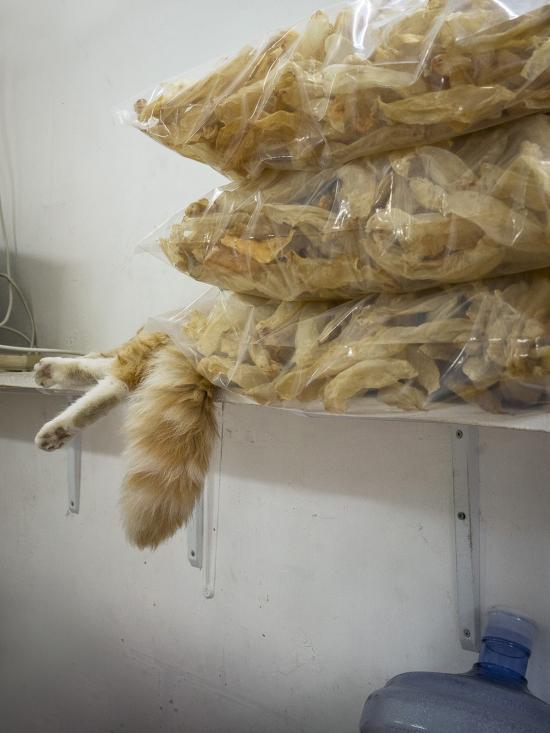 HK-shop-cats24
