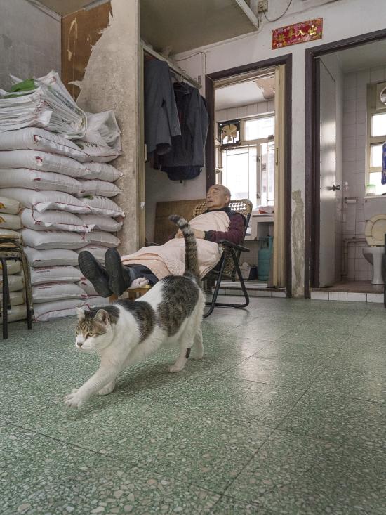 HK-shop-cats14
