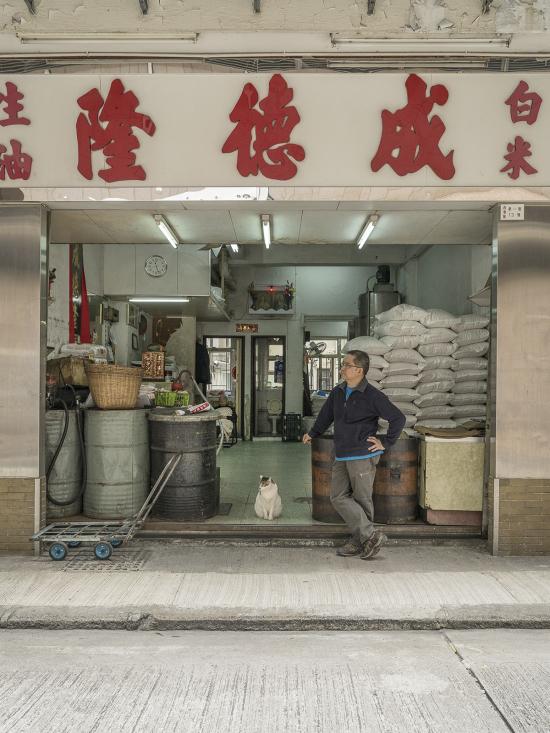 HK-shop-cats15