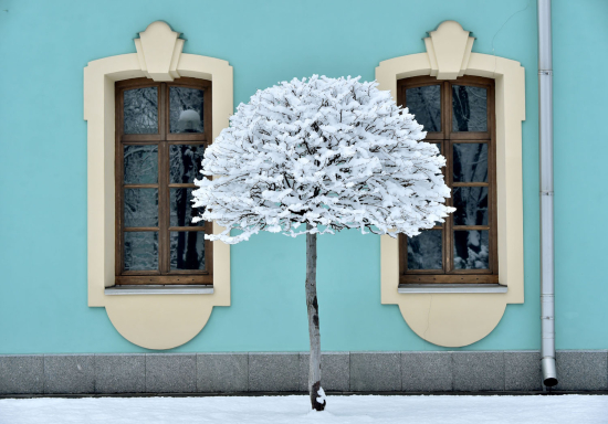 Kiev-tree