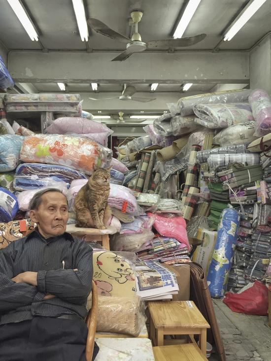 HK-shop-cats12