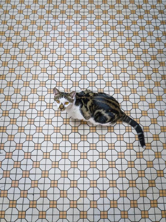 HK-shop-cats17