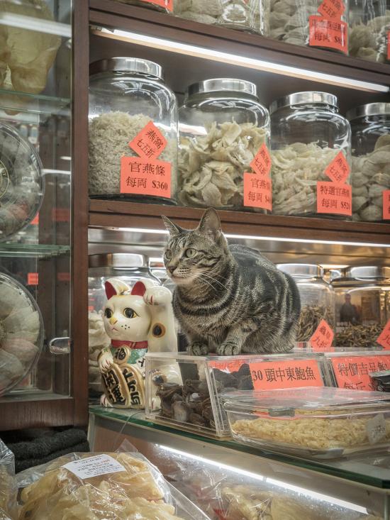 HK-shop-cats18