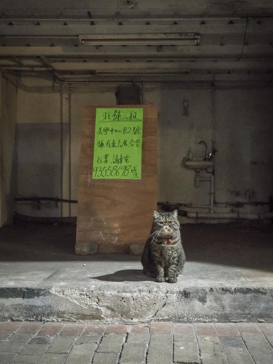 HK-shop-cats27