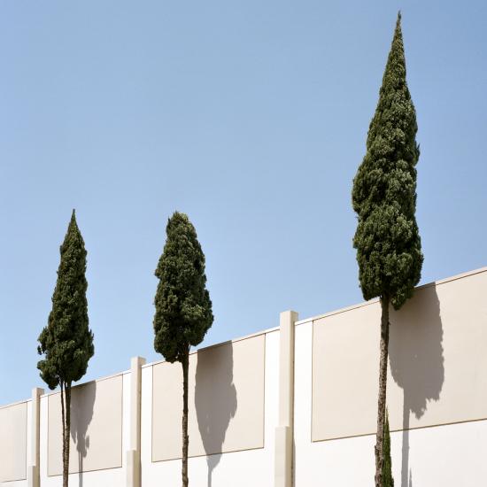 LA-trees4