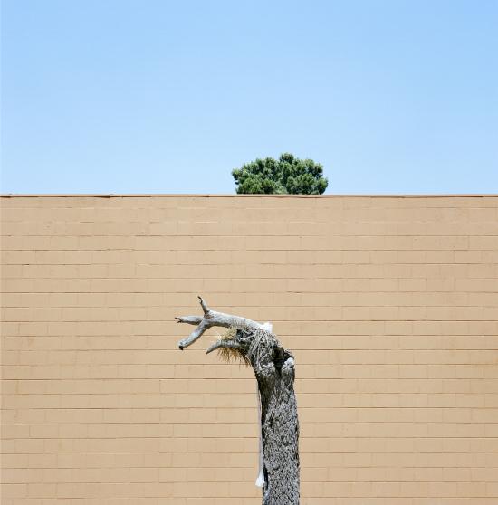 LA-trees7