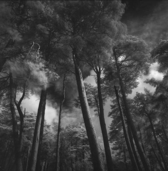 Prince-Kippen+Muir+Pines+August+2015