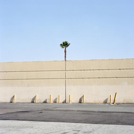 LA-trees2