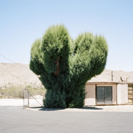 LA-trees8
