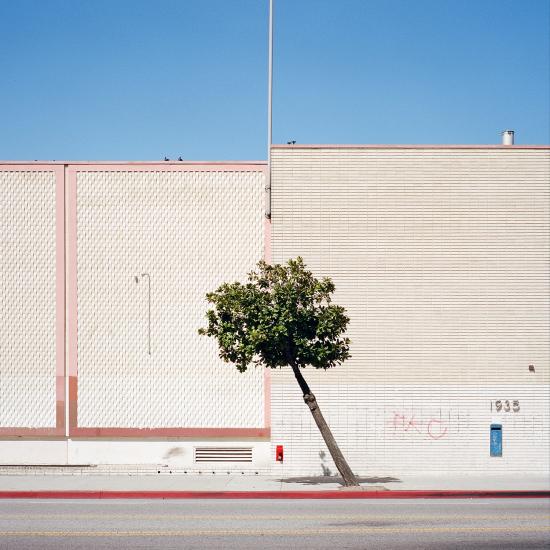 LA-trees10