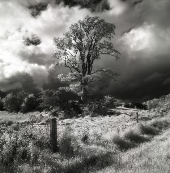 Prince-Dykehead+Tree