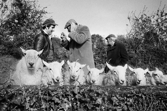 Parr-Manorhamilton-Sheep-Fair-County-Leitrim-Ireland-1981-by-Martin-Parr-_-Magnum-Photos-954x636