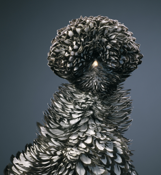 Tim-flach-Silver_Laced_Poland