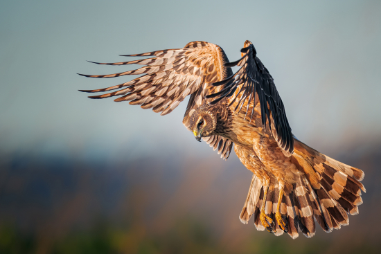 Audubon-5