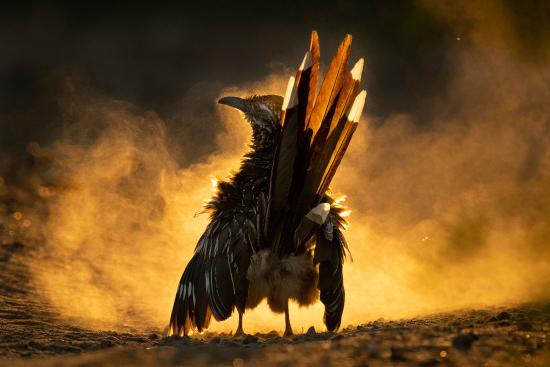 Audubon-7