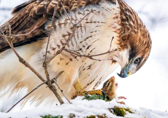 Audubon-10