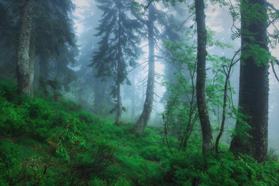 Spruce2