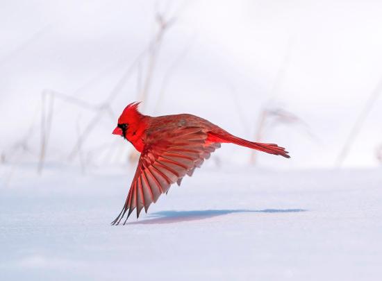 Audubon-1